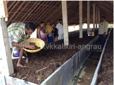 Releasing earthworms in the Vermicompost pit.jpg