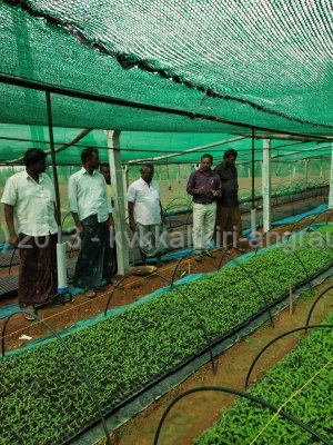 Raising of Vegetable Nursery at Narayanapuramu by ARYA entrepreneurs.jpg